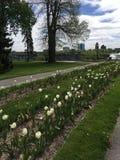 Mein schöner ruhiger Frühlingstag Stockfotos
