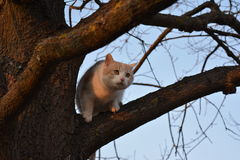 Meine andere Katze! Lizenzfreie Stockfotografie