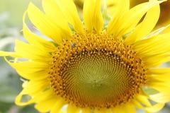 Meine Blume Lizenzfreies Stockfoto