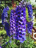 Meine Blumen Lizenzfreies Stockfoto