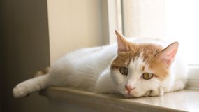 Meine Haustierkatze Stockfoto