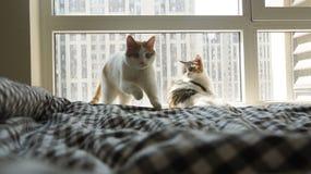 Meine Haustierkatze Lizenzfreies Stockbild