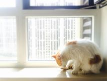 Meine Haustierkatze Stockfotos