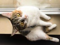 Meine Haustierkatze Lizenzfreie Stockbilder