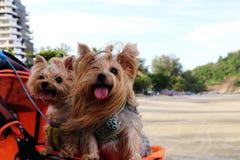Meine Hunde auf dem Strand Stockfotos