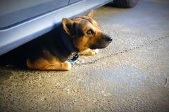 Meine Hundekamera schüchtern, wie ich versuche, sein Bild gefangenzunehmen lizenzfreies stockbild