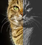 Meine Katze lizenzfreies stockbild