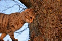 Meine Katze! Lizenzfreies Stockfoto
