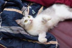 Meine Katze Stockfoto
