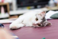 Meine Katze Lizenzfreie Stockfotos