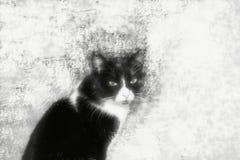 Meine Katze lizenzfreie stockfotografie