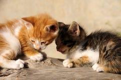 Meine kleinen Katzen Stockbild