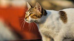 Meine lustigen Katzen Lizenzfreies Stockbild