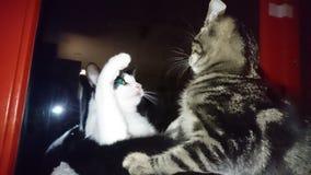 Meine reizenden Miezekatzen Stockfoto
