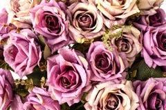 Meine Rosen Lizenzfreie Stockbilder