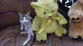 Meine süße Miezekatze mit Teddybären stockbild
