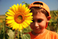 Meine Sonnenblume Stockfotografie