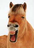 Meine teeths heraus lachen Stockfotografie