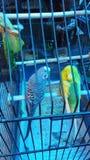 Meine Vögel Stockbild