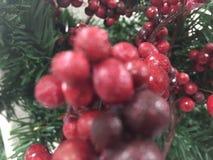Meine Weihnachtsbeere Lizenzfreie Stockfotos