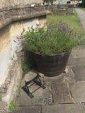 Meio barril de madeira usado como o plantador fora da igreja com planta da alfazema foto de stock royalty free