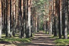 Meio-dia de madeira Imagem de Stock Royalty Free
