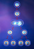 Meiosis cell division duplication Stock Images