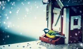 Meise, die auf Vogelfuttertrog in einem Haus sitzt und Kamera auf dem Hintergrund von Schneefällen eines Winters betrachtet Stockfoto