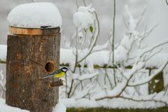 Meise im Schnee stockfoto