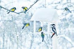 Meise- und Spechtvögel in weißem hölzernem lizenzfreie stockfotografie