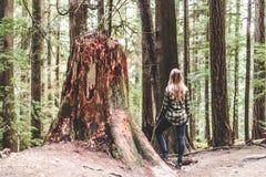 Meisje in Baden Powell Trail dichtbij Steengroeverots in Noord-Vancouver, stock afbeelding