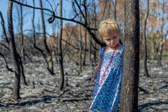 Meisje binnen in blauwe kleding in gebrand bos na het verstand van de struikbrand royalty-vrije stock foto