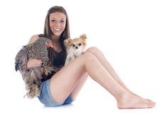 Meisje, chihuahua en kip royalty-vrije stock foto's