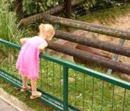 Meisje dat aan beer kijkt royalty-vrije stock fotografie