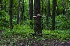 Meisje dat boom koestert Close-up van handen die boom a koesteren Stock Foto
