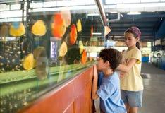 Meisje dat broer de kleurrijke vissen toont Stock Foto