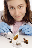 Meisje dat camera en het inspecteren vlinders bekijkt Royalty-vrije Stock Foto's