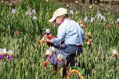 Meisje dat een fiets in de irissenweide berijdt Royalty-vrije Stock Afbeelding