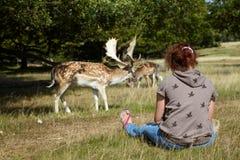 Meisje dat op deers kijkt royalty-vrije stock foto