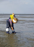 Meisje dat zeeschelpen verzamelt stock afbeeldingen