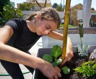 Meisje die in boomgaard opgeheven bedtuin werken stock afbeeldingen