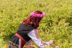 Meisje die Bulgaarse roze rozen in een tuin plukken royalty-vrije stock foto's