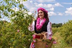 Meisje die Bulgaarse roze rozen in een tuin plukken royalty-vrije stock afbeeldingen