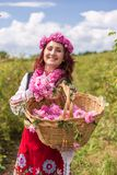 Meisje die Bulgaarse roze rozen in een tuin plukken stock afbeelding