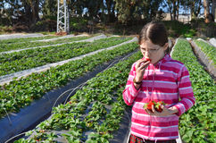 Meisje die de aardbei op landbouwbedrijf eten stock foto