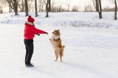 Meisje die de colliehond opleiden bij de winterpark royalty-vrije stock afbeeldingen