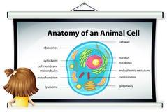 Meisje die diagram van dierlijke cel bekijken Royalty-vrije Stock Foto's