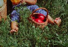 Meisje die die vruchten eten enkel in tuin worden geplukt stock afbeelding