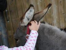 Meisje die een kleine ezel petting stock fotografie