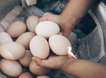 Meisje die en goede organische eierenkwaliteit houden het plukken en brengt aan het oog op het landbouwbedrijf Gezond Voedsel Pas royalty-vrije stock foto's